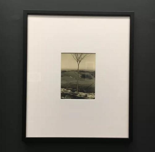树苗,阿尔伯特·伦格-帕契,1929