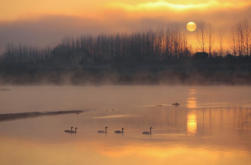 《晨光中的小天鹅》摄影:杜世宏_副本.jpg