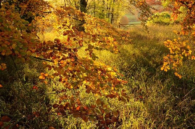 项目�UYoung Landscape Photographer of the Year 2013 作品�UAutumn Colour at Polesden Lacey 得奖者�UChristopher Page 拍摄的地点�U英格兰 Surrey